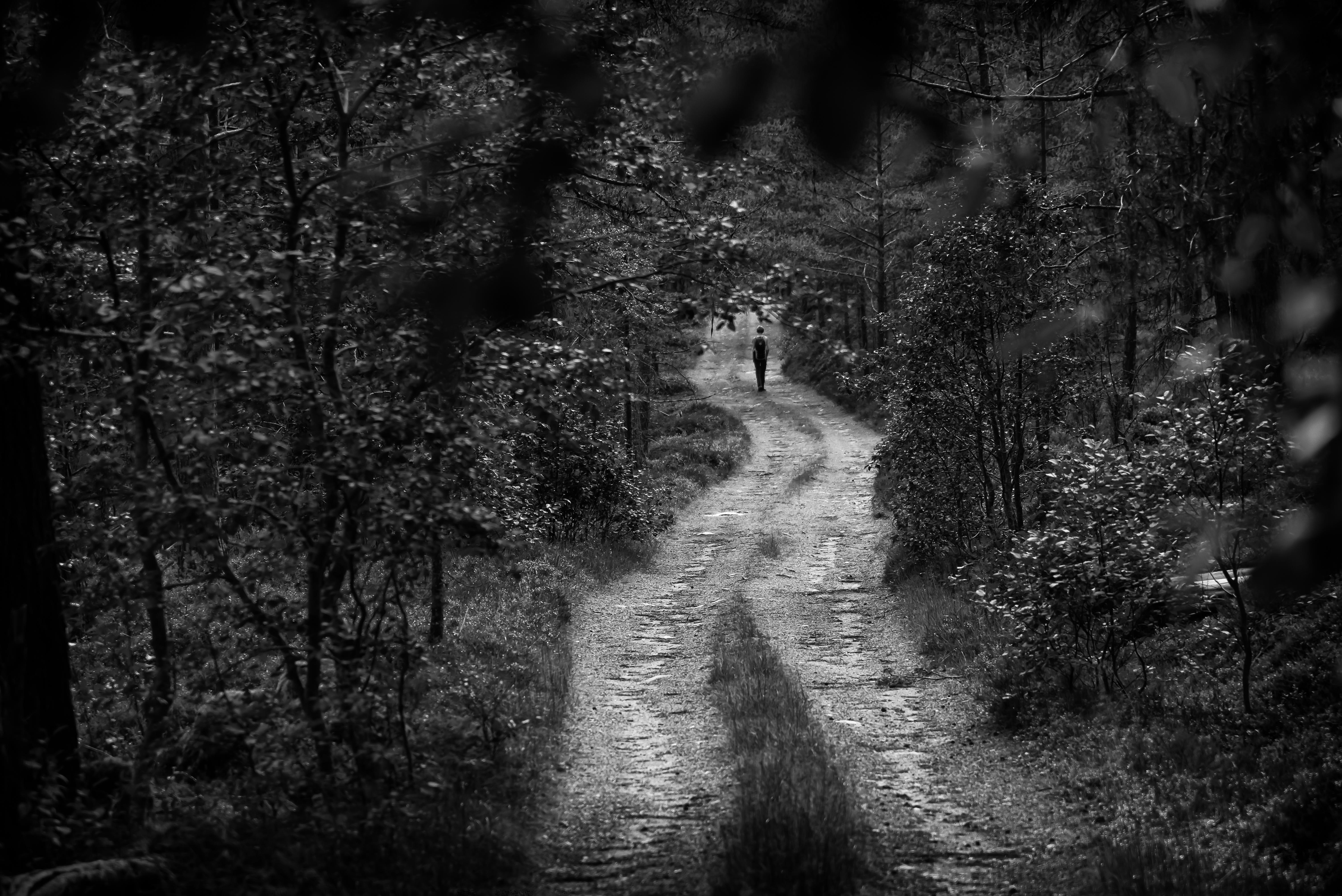 skogsvei